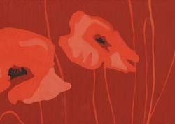 andie-scott-small-poppies