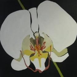 andie.scott-orchid24