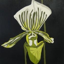 andie.scott-orchid26
