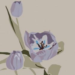 andie.scott-tulip